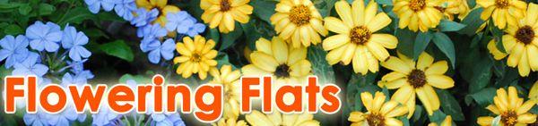 Flowering Flats