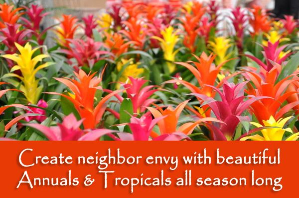 annuals and tropicals