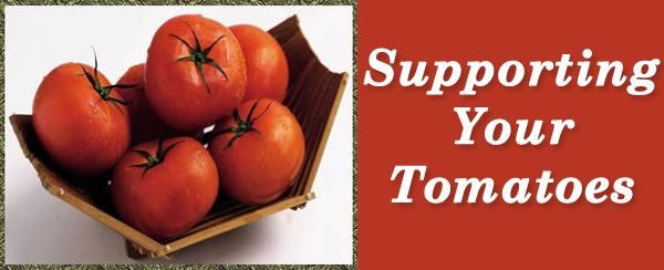 Supporting Tomatoes