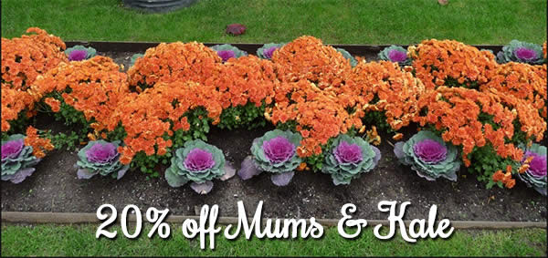 mums and kale