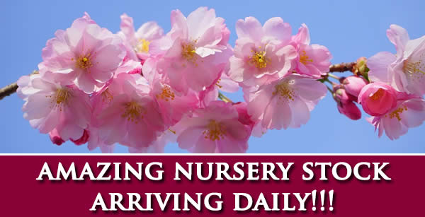 Nursery Stock