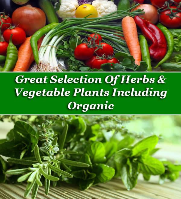 Herbs and Vegetables - including organic